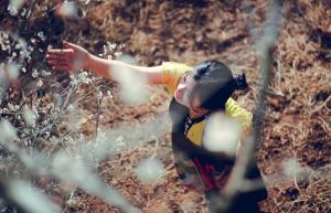 review hoa mo moc chau tat tan tat 01 300x193 - Review tất tần tần tật về hoa mơ Mộc Châu