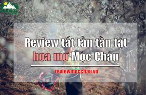 review hoa mo moc chau tat tan tat 300x195 - Review tất tần tần tật về hoa mơ Mộc Châu