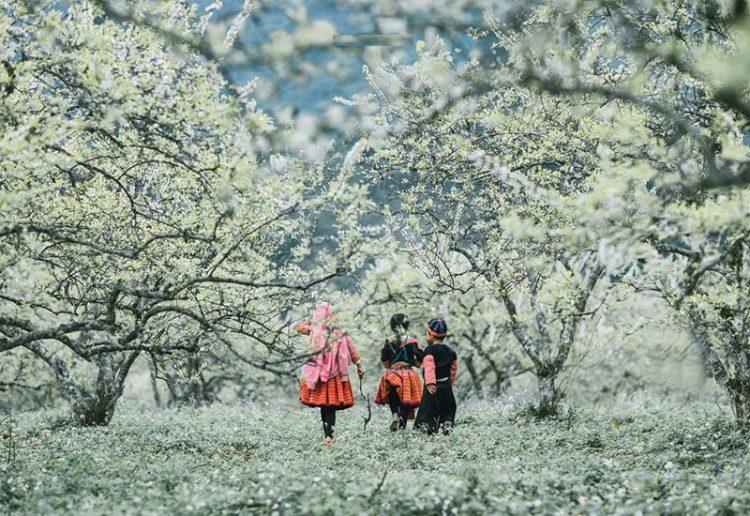 hoa man moc chau 01 750x516 - Kinh nghiệm du lịch mùa hoa mận Mộc Châu