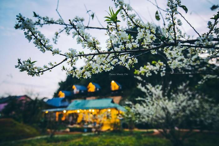 hoa man moc chau 1 - Kinh nghiệm du lịch mùa hoa mận Mộc Châu