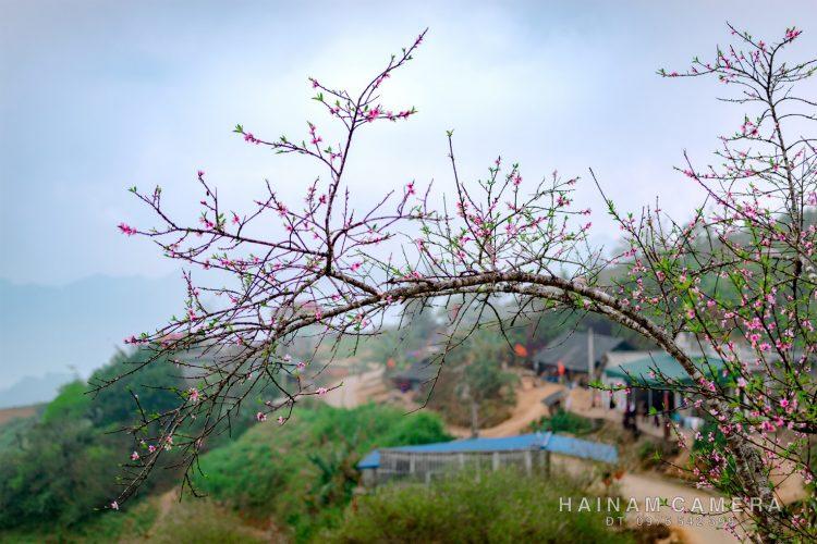 le hoi hoa dao 2020 04 750x500 - Chương trình ngày hội hoa đào Vân Hồ 2020