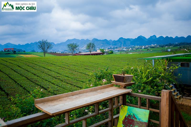 The Meadow Homestay 15 - Combo Homestay The Meadow Mộc Châu | 990k / người
