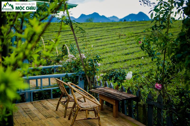 The Meadow Homestay 32 - Combo Homestay The Meadow Mộc Châu | 990k / người