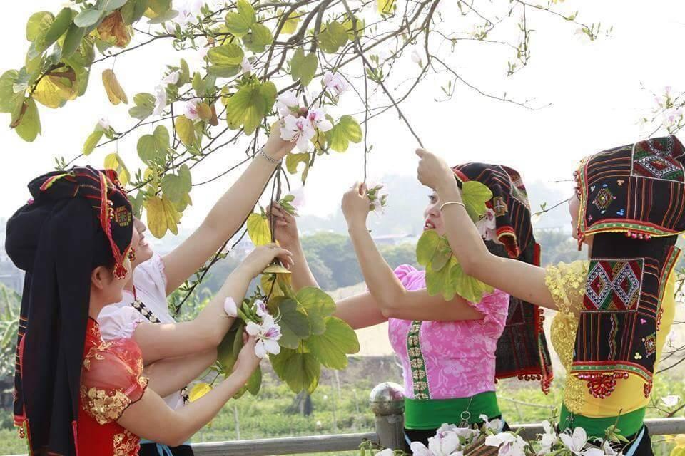 hoa ban moc chau 8 1 - hoa ban Mộc Châu - Loài hoa thiếu nữ