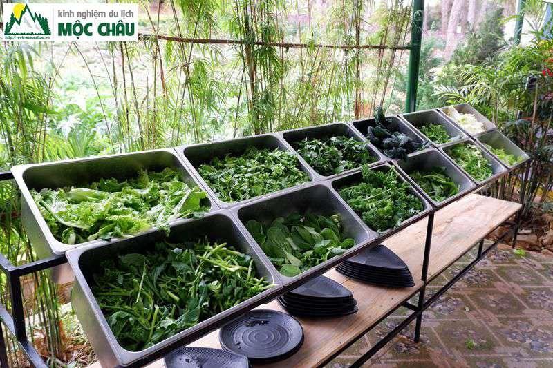 lau buffet 50k moc chau chimi farm 8 - Ăn Buffet Lẩu rau ở Mộc Châu chỉ với 49k/ 1 người | Chimi Farm