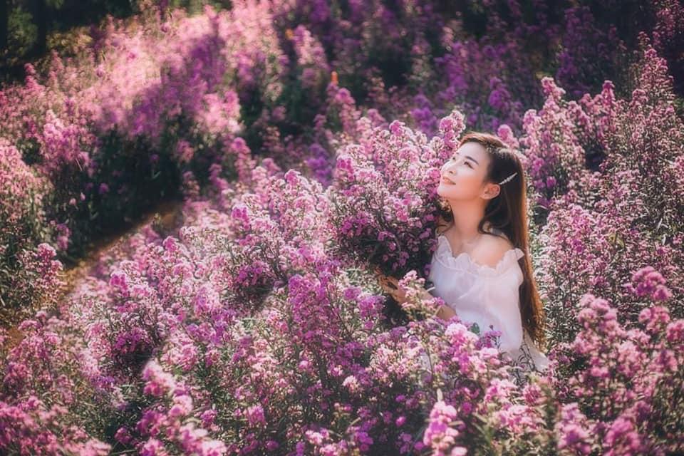 vuon hoa thach thao moc chau 4 - Đã mắt với vườn hoa thạch thảo Mộc Châu