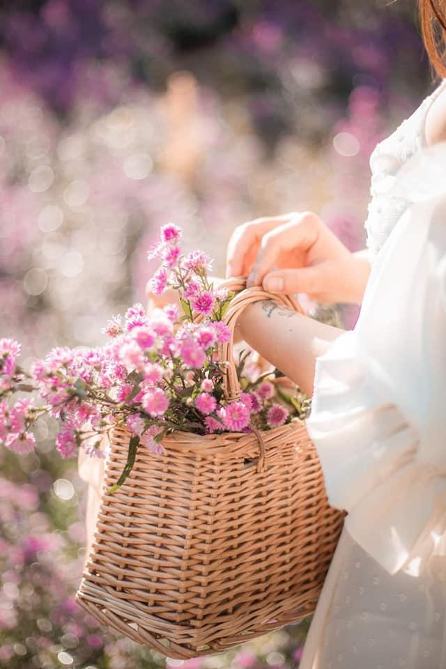 vuon hoa thach thao moc chau 7 - Đã mắt với vườn hoa thạch thảo Mộc Châu