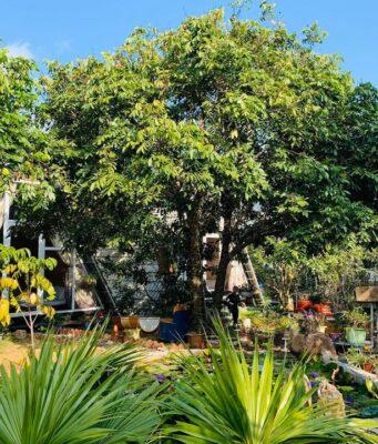Khuôn viên Làng Homestay Mộc Châu