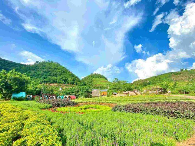 review happyland moc chau 15 644x483 - Review happyland Mộc Châu tất tần tật | Vườn hoa đẹp nhất Mộc Châu