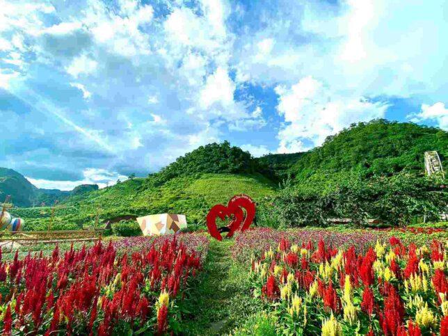 review happyland moc chau 18 644x483 - Review happyland Mộc Châu tất tần tật | Vườn hoa đẹp nhất Mộc Châu