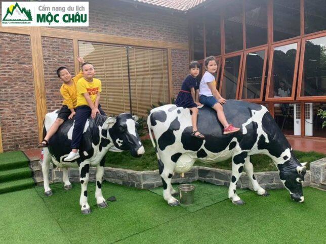 review trang trai bo sua moc chau 19 result 644x483 - Review trang trại bò sữa daily farm Mộc Châu | chi tiết, đầy đủ nhất