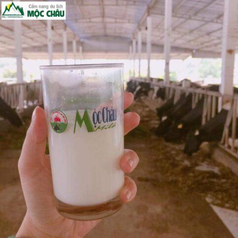 review trang trai bo sua moc chau 9 result 483x483 - Review trang trại bò sữa daily farm Mộc Châu | chi tiết, đầy đủ nhất