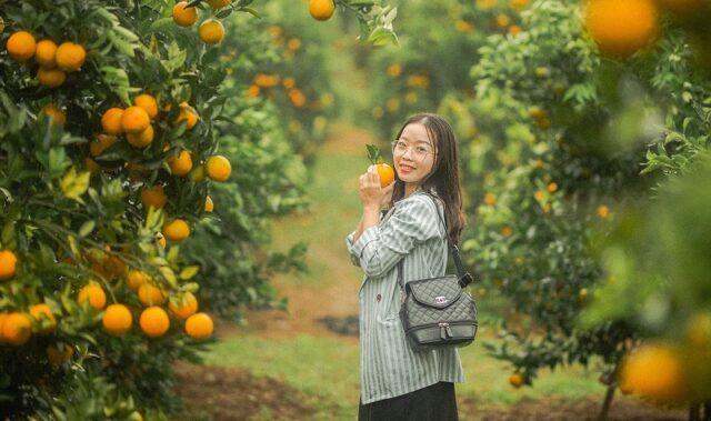 Checkin vườn cam ở Mộc Châu - Cre : Lê Xuân Hải