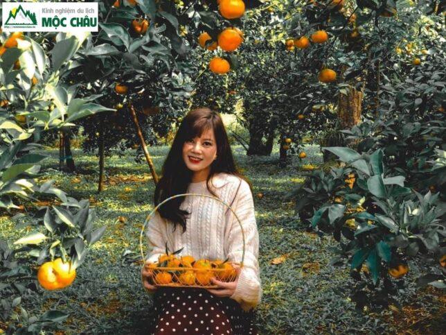 hai cam moc chau 14 644x483 - Checkin vườn cam ở Mộc Châu trải nghiệm khó quên