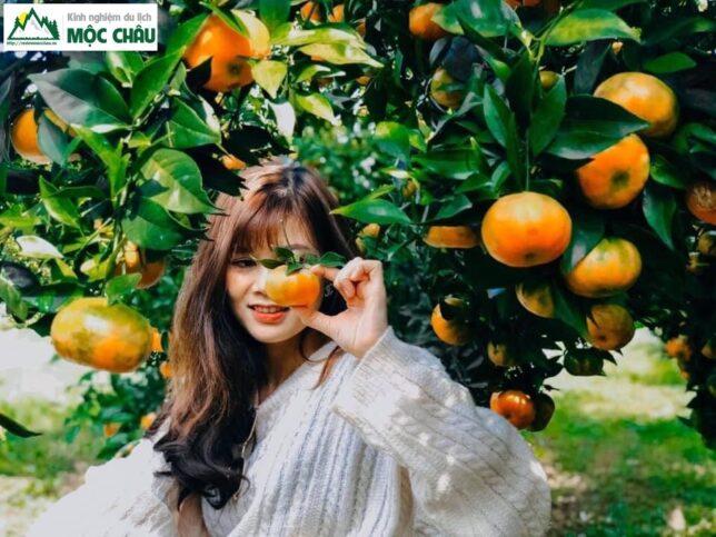 hai cam moc chau 18 644x483 - Checkin vườn cam ở Mộc Châu trải nghiệm khó quên