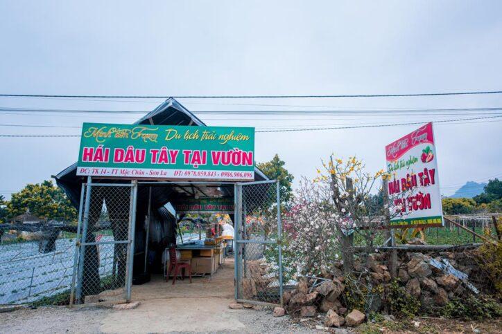 minh tien farm moc chau 50 724x483 - Khám phá dâu tây khổng lồ ở trang trại Minh Tiến Farm