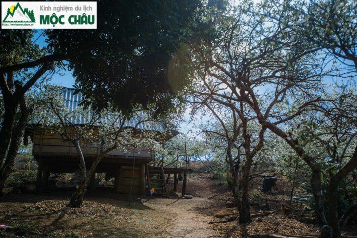 MCC 0060 Copy result 724x483 - Review Thung lũng Phiêng Khoang Mộc Châu chi tiết