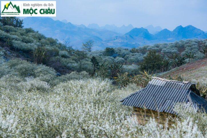 MCC 0070 Copy result 724x483 - Review Thung lũng Phiêng Khoang Mộc Châu chi tiết
