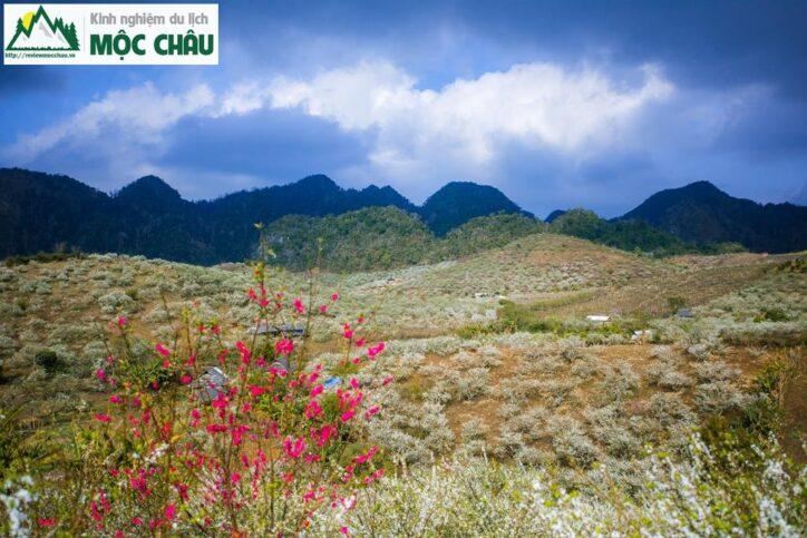MCC 9906 Copy result 724x483 - Review Thung lũng Phiêng Khoang Mộc Châu chi tiết