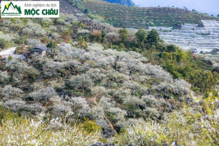 MCC 9907 Copy result 724x483 - Review Thung lũng Phiêng Khoang Mộc Châu chi tiết