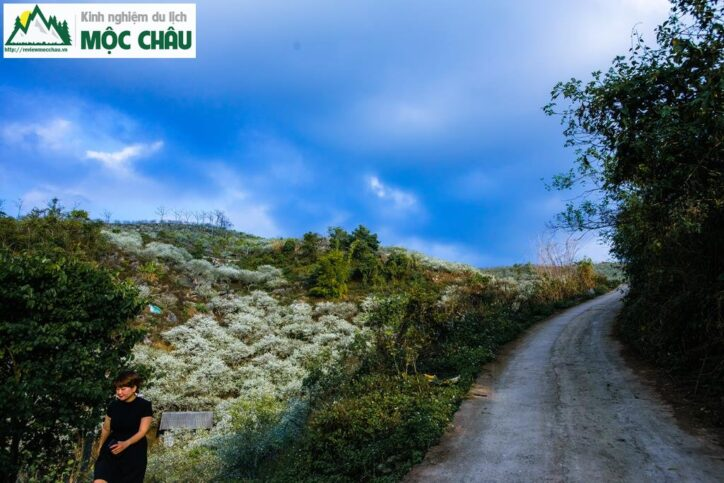 MCC 9998 Copy result 724x483 - Review Thung lũng Phiêng Khoang Mộc Châu chi tiết