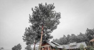 The Nordic Village Moc Chau 13 300x160 - Review Mộc Châu tất tần tật | Blog chia sẻ kinh nghiệm du lịch Mộc Châu