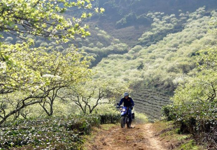 thue xe may o moc chau 9 696x483 - Hướng dẫn, chia sẻ kinh nghiệm thuê xe máy ở Mộc Châu